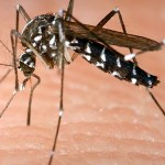 Thailand braces for record dengue fever epidemic