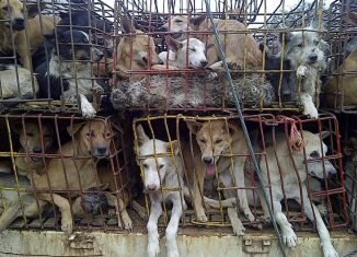 Dogs off the menu in Southeast Asia