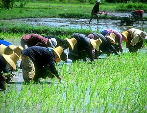Angry Thai rice farmers rushing to Bangkok for rally
