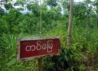 Myanmar to expand private investment in forest plantations