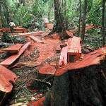 Laos launches plan to stem illegal logging after revenue drop