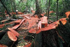 Laos timber