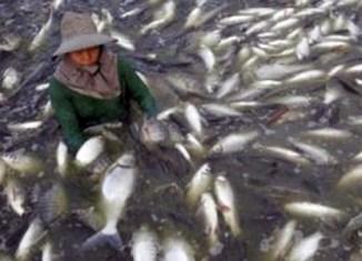 Malaysia government bans fish exports