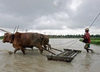 DuPont sets sight on Myanmar farming