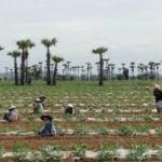 Myanmar seeks agriculture assistance