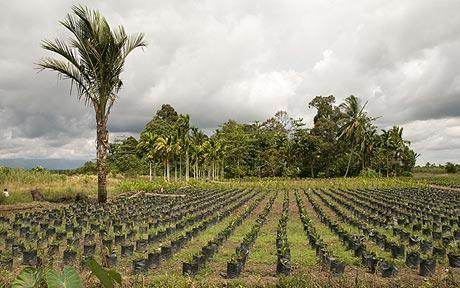 Cargill to boost palm oil investments