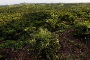 Palm oil representatives heading to US