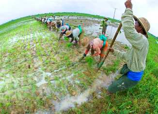 Philippine agri-land laws 'tragic': Senator