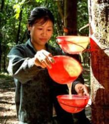 Rubber myanmar