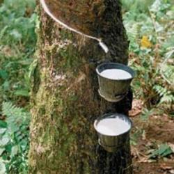 Rubber market news - Daily update rubber price, rubber market news