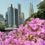 Singapore's growth slows to 1.3%