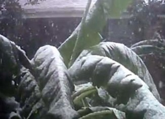 Snowfall in the Philippines: It didn't happen (video)