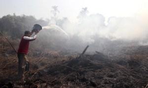 Sumatra fires