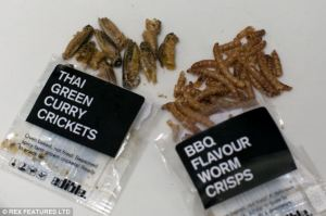Thai insects1