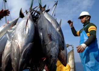 Vietnam to establish fishing business with Indonesia
