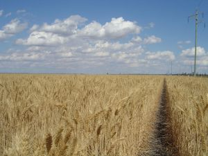 UAE and Western Australia to work on wheat issues