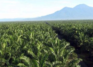 Wilmar to sack Indonesian palm oil suppliers