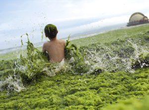 algae boy