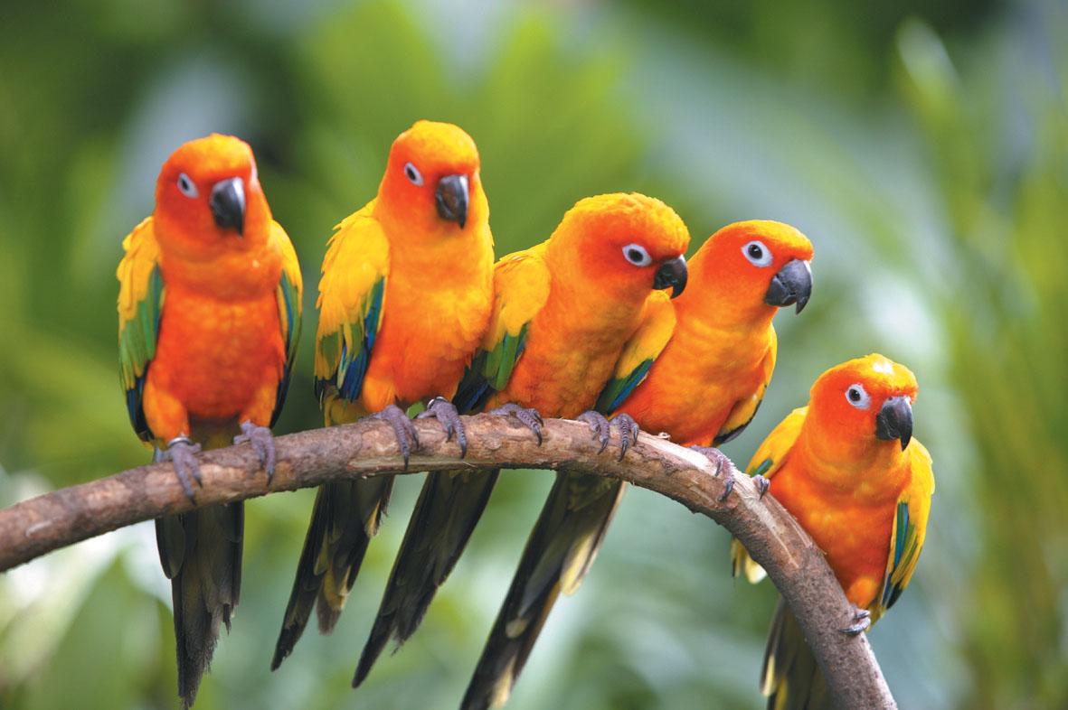 birds of paradise in indonesia investvine