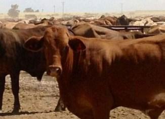 Indonesia to buy 1m hectares of Australian farmland
