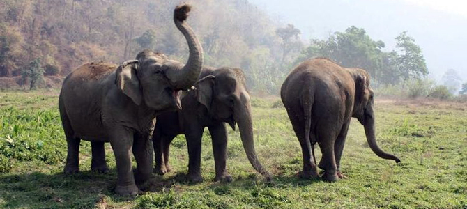 Thai police stamp out illegal elephant rings