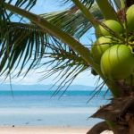 Philippines aims at improving coconut production
