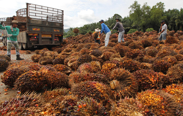 Malaysia's agro giant Felda in expansion spree