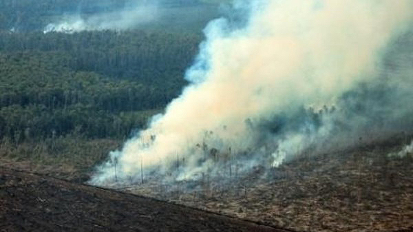 Sumatra fires: First culprits named