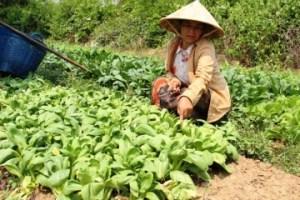 laos farmer