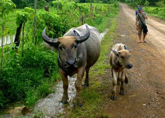 Laos to spend $27m to fight rural poverty