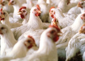 UAE scopes out Philippine poultry