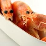 Thailand's shrimp export set to decline by half