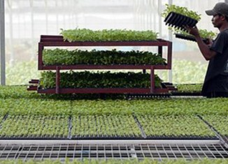 Singapore aims to become self-sustainable in food production