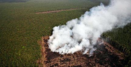 Malaysian firms named to be behind Sumatra fires