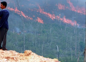 Malaysian firms named to be behind Sumatra fires