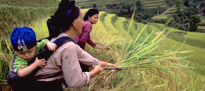 Women could sow greater food security