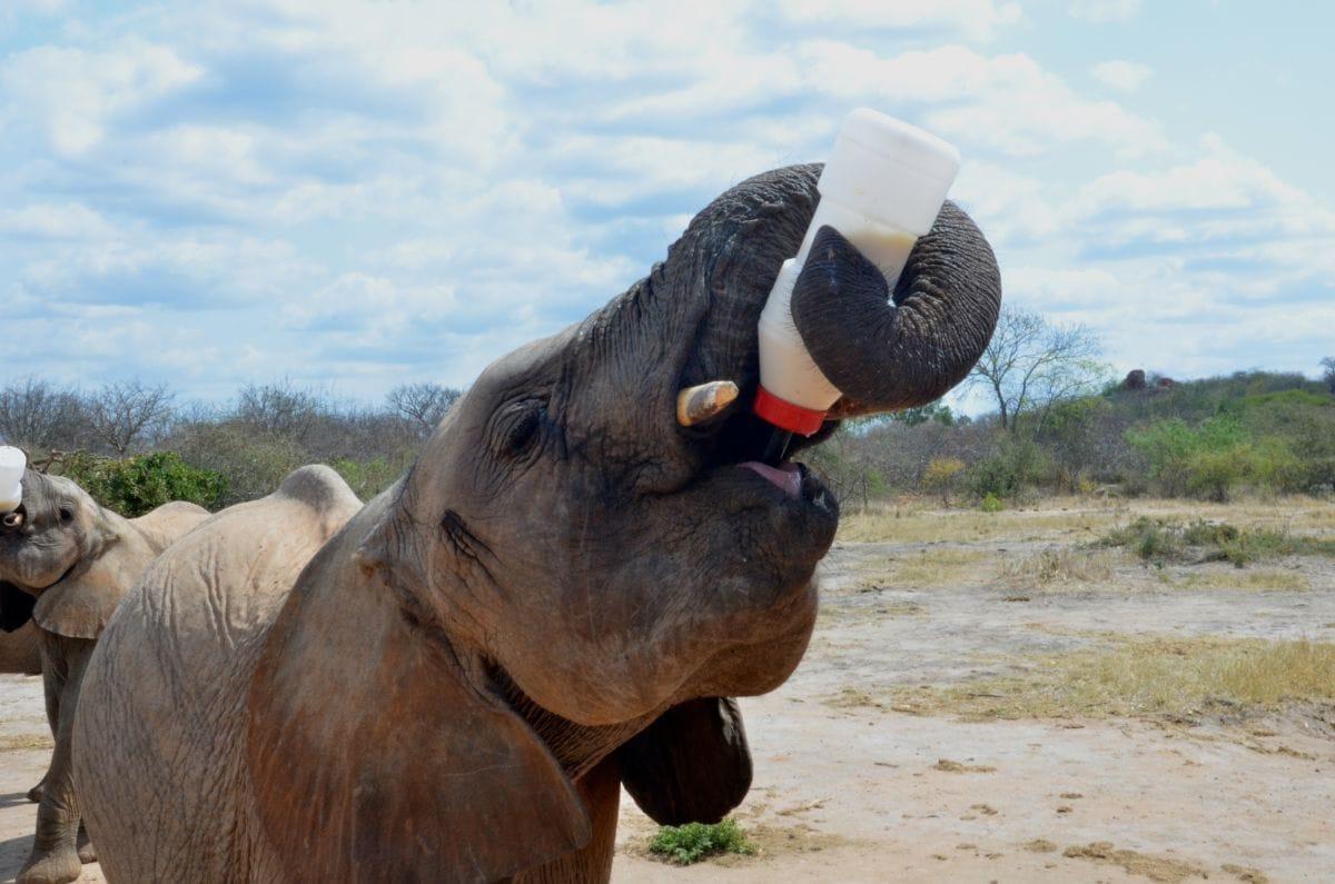 Dispatch from Kenya: Ithumba Camp, Kenya