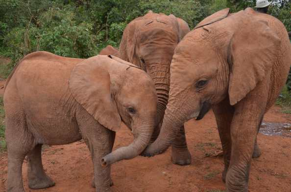 A few of the orphans from the DSWT in Kenya