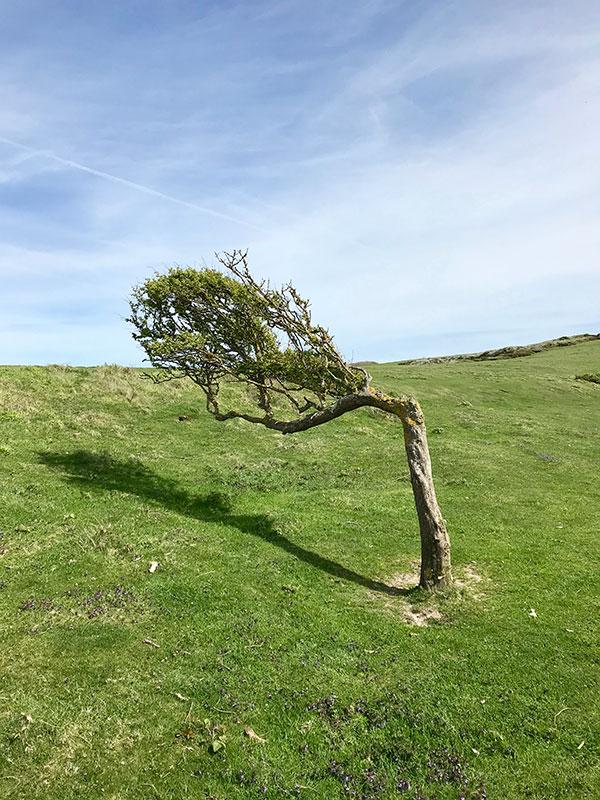 El viento en Seven Sisters.