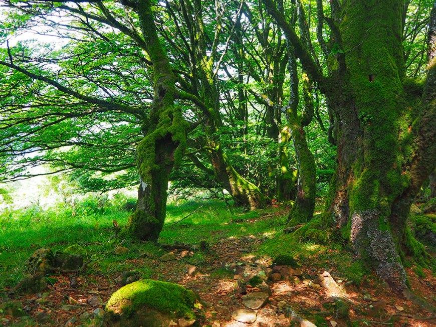El bosque encantado de la ruta de los dólmenes.