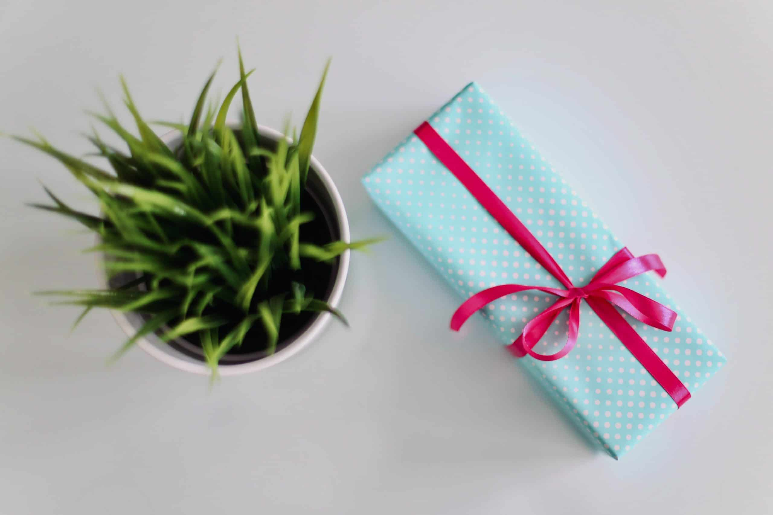 Wrapped Gift and Plant
