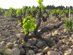 Notion de terroir : dogme ou lubie ?