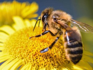 The New EU Biodiversity Strategy Must Protect Bees and Pollinators