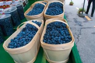 Jean Talon Market Blueberries