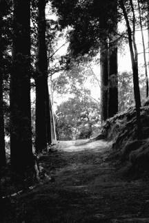 walking from dark to light