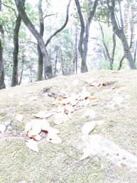 CatMam_07_2012-2