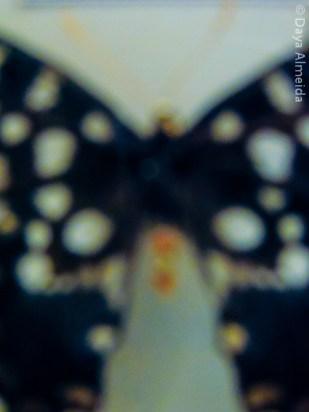 DAlme_11_2013-5