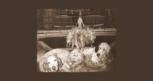 Si dice che nella vita di ogni Cacciatore ci sia stato un Cane indimenticabile, un cane con cui paragonare tutti quelli passati e futuri,