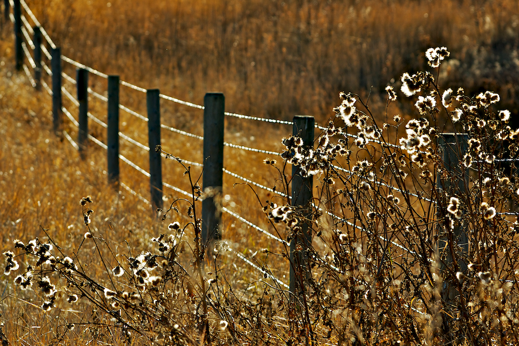 More Than Just a Fence…