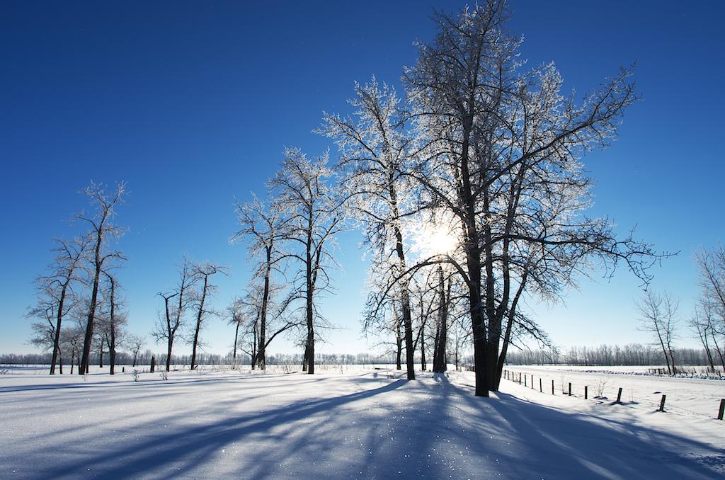 A Winter Eden